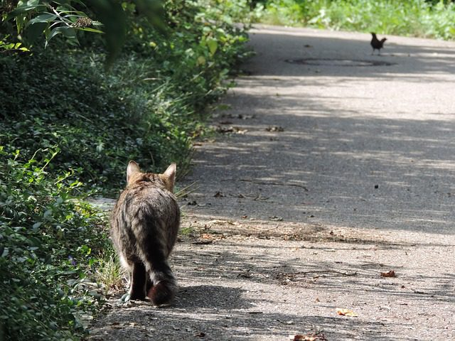 A cat stalking a bird in the road.